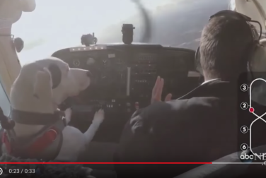 Dogs learn how to fly for real, in real life, in a real airplane!
